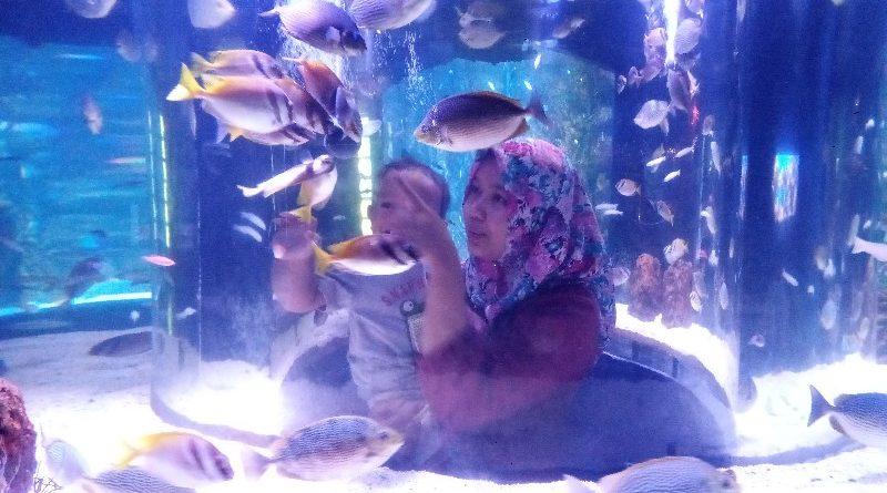 Hunting Promo Ticket Jakarta Aquarium dan Taman Safari Cuma 350rb